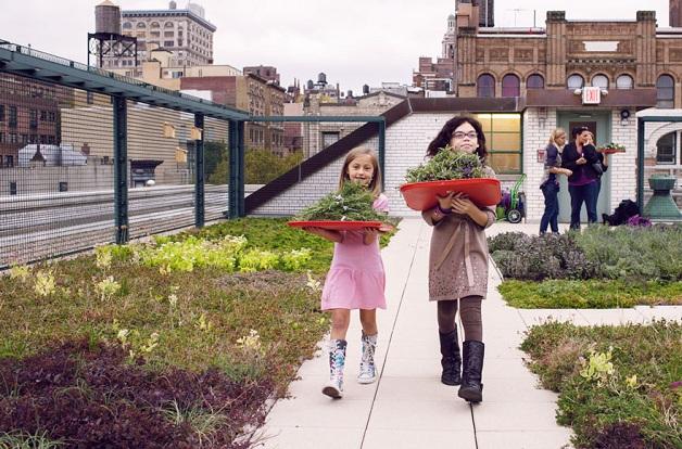 Escola pública ganha painéis solares e horta nos telhados em Nova York