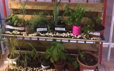 Alunos de escola pública desenvolvem projeto com plantas medicinais