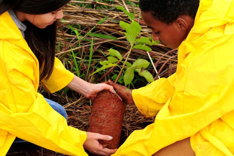 Crianças da rede pública de ensino ajudam a plantar 1,5 mil mudas no DF
